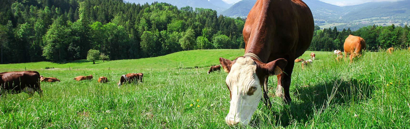 Coopérative laitiere de Lescheraines