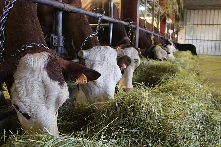La ferme Chatelain producteur des Bauges